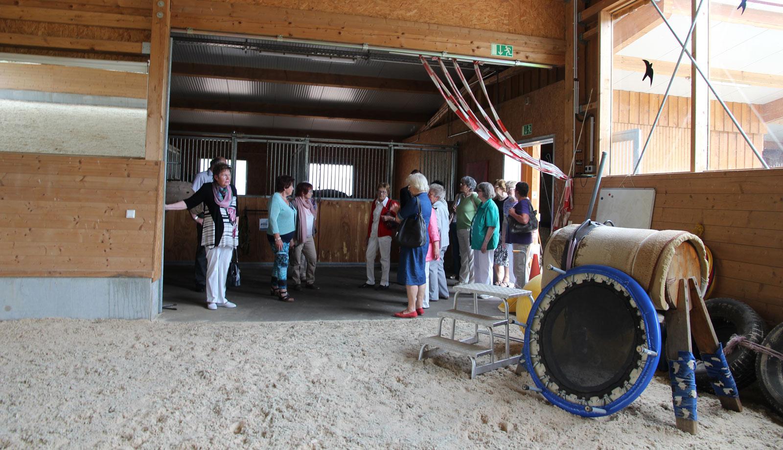 Über die wohltuende Wirklung von der Therapie mit Pferden und den
