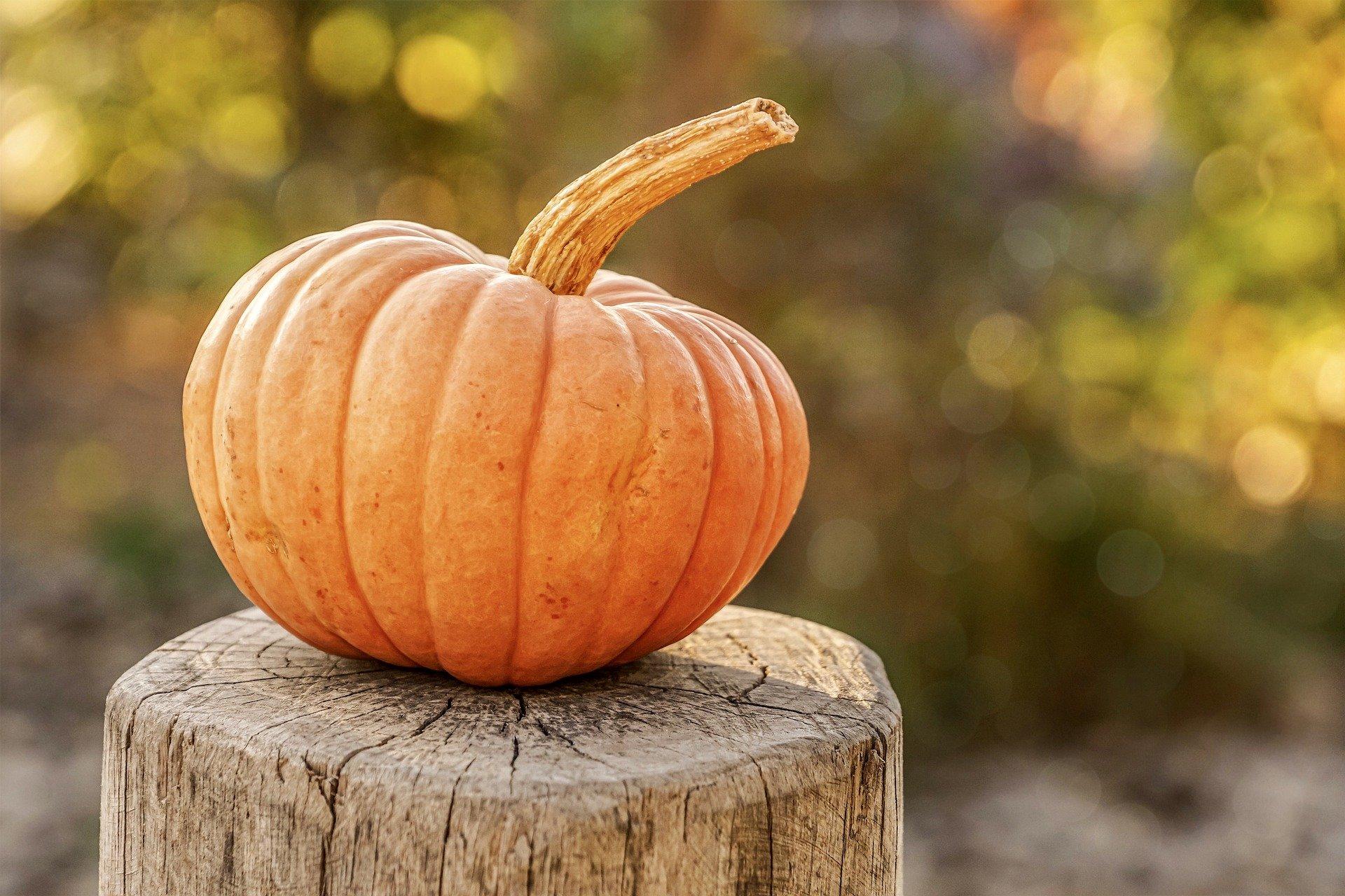 """Saisonal startete das """"Grüne Klassenzimmer"""" heute mit dem Thema Herbst, Ernte und dem Schnitzen eines Halloweenkürbis."""